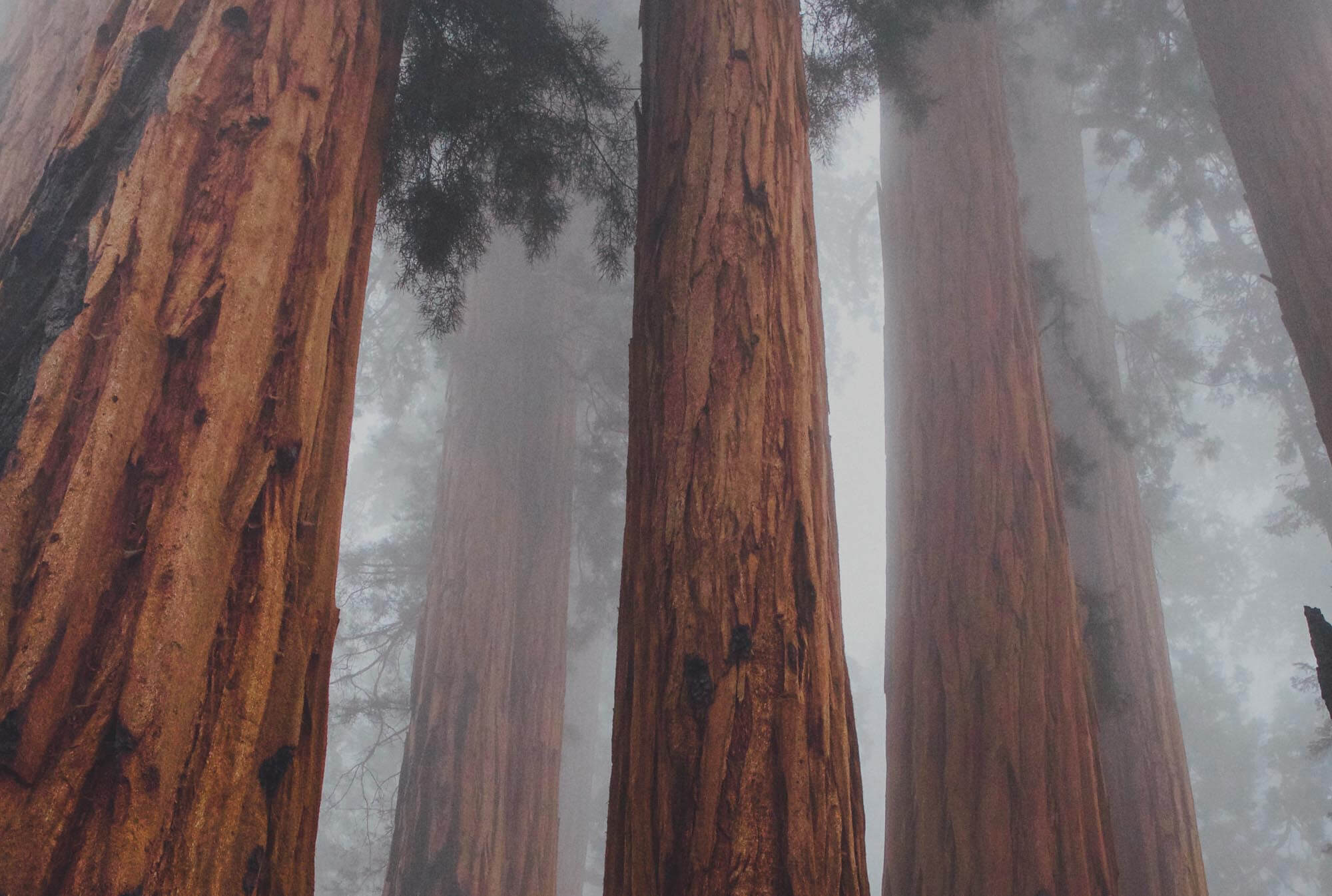 Tree-Mist